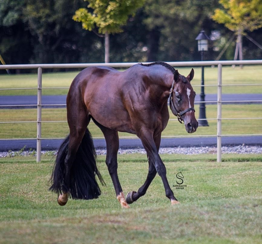 Equine Auction Exchange | Online Horse & Tack auctions - ULTIMATELY FABULOUS